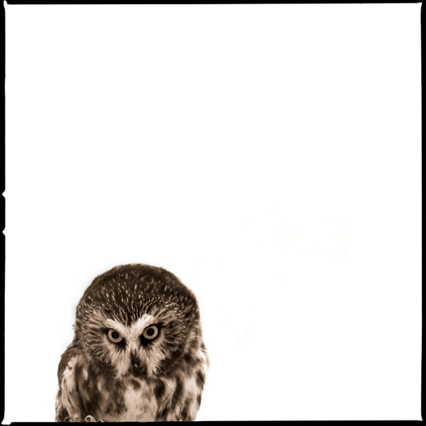 Owl-IV