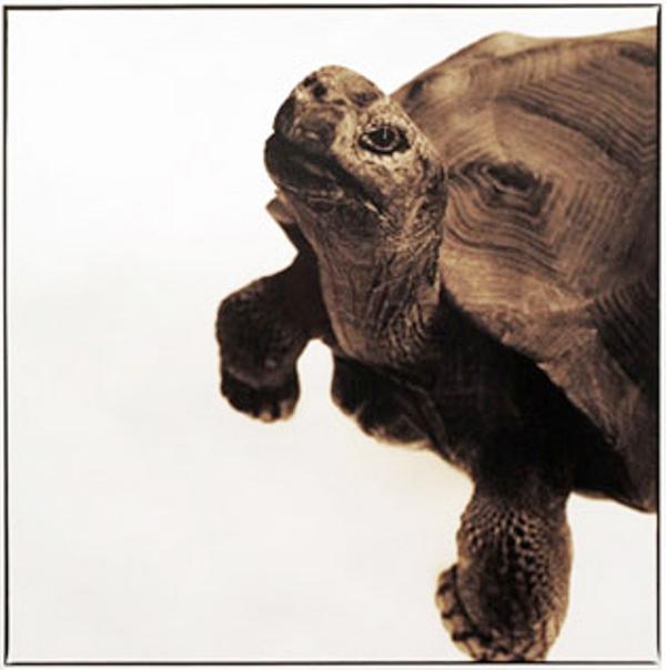 Tortoise-I