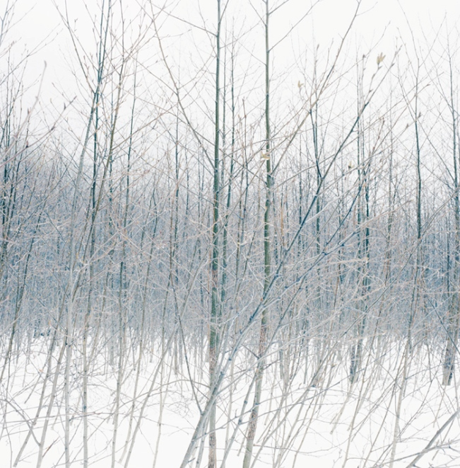 Wilderness 38055-7-08