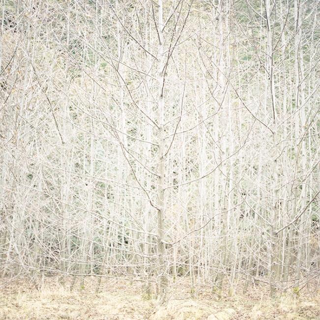 Wilderness 06402-8-10