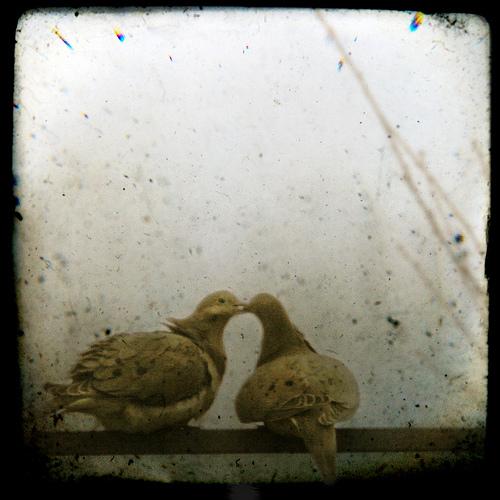 pigeonlove_lepiafgeo_flickr1