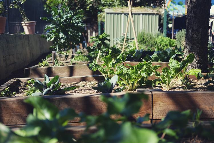 Organic Gardening Bondi Beach Vegan Lifestyle Blog 02.jpg