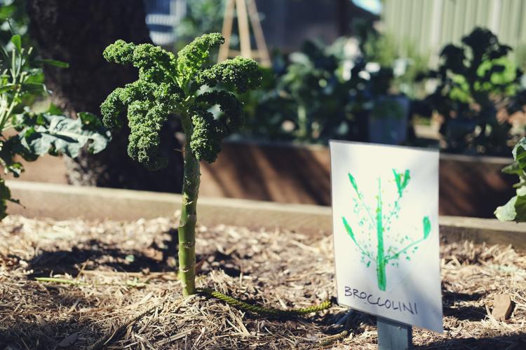 Organic Gardening Bondi Beach Vegan Lifestyle Blog.jpg