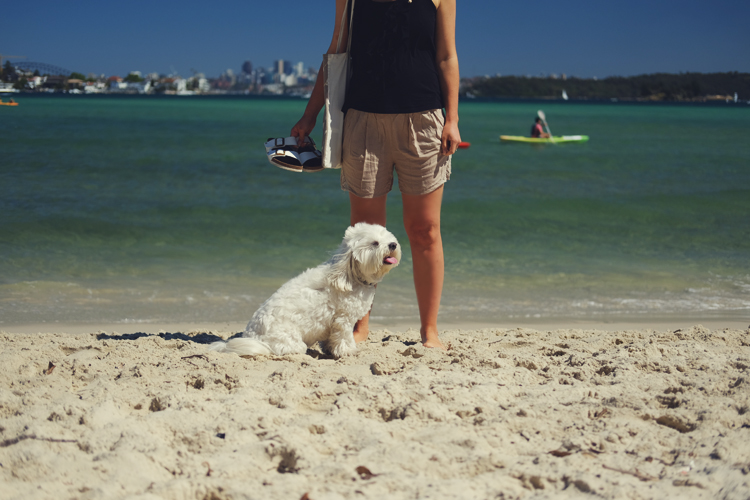 Rose Bay Dog Beach Liv Life Mag.jpg