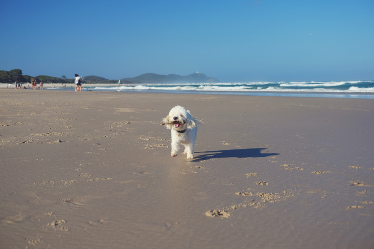 Sufflok Park Dog Beach Byron Bay.jpg