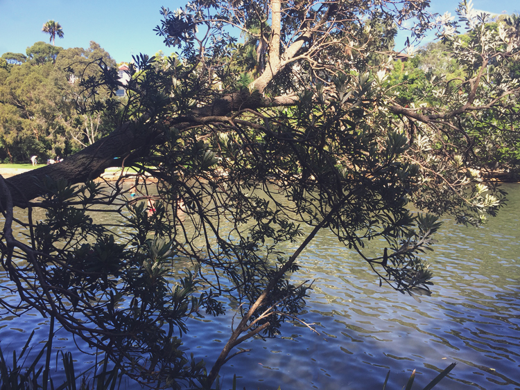 parsley bay sydney 02.jpg