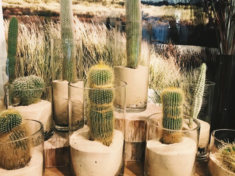bondi cacti.jpg