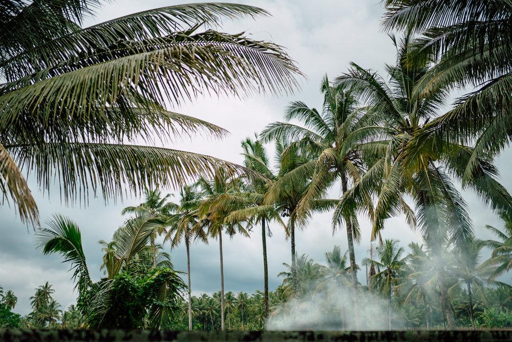 Bali-Gamelan-Web-14.jpg