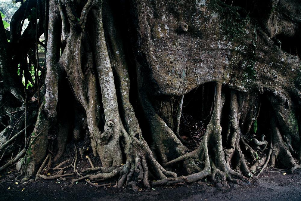 Bali-Travel-Web-6.jpg