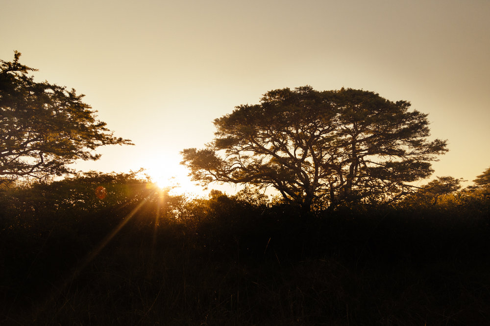 South-Africa-Safari-39.jpg
