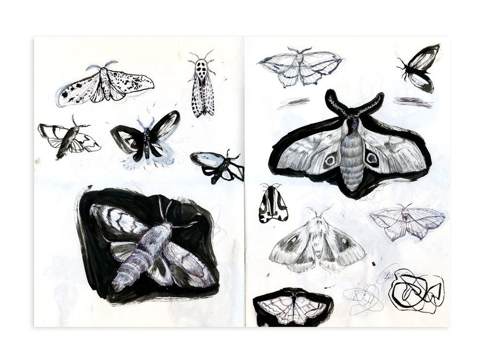 Moth Initial Drawings
