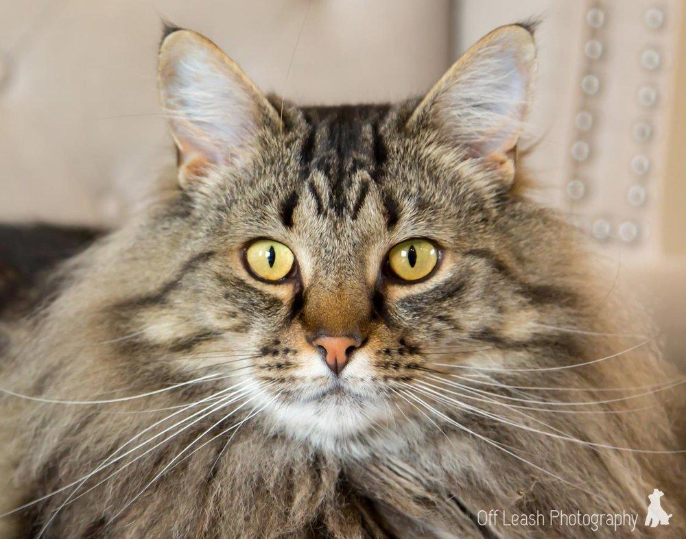 cat pics buster.jpg