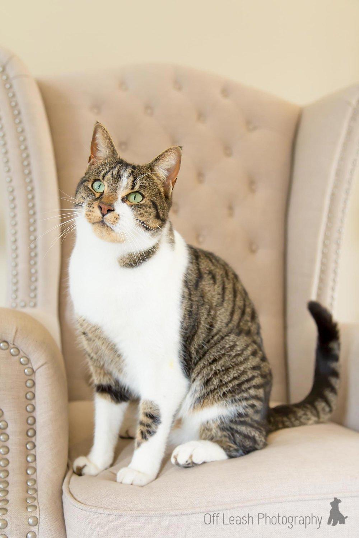 pretty cat jasper.jpg