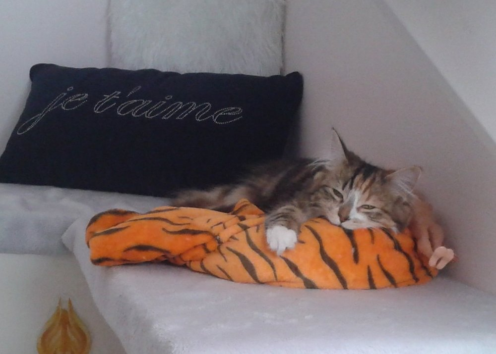 happy cat at Luxury Cattery.jpg
