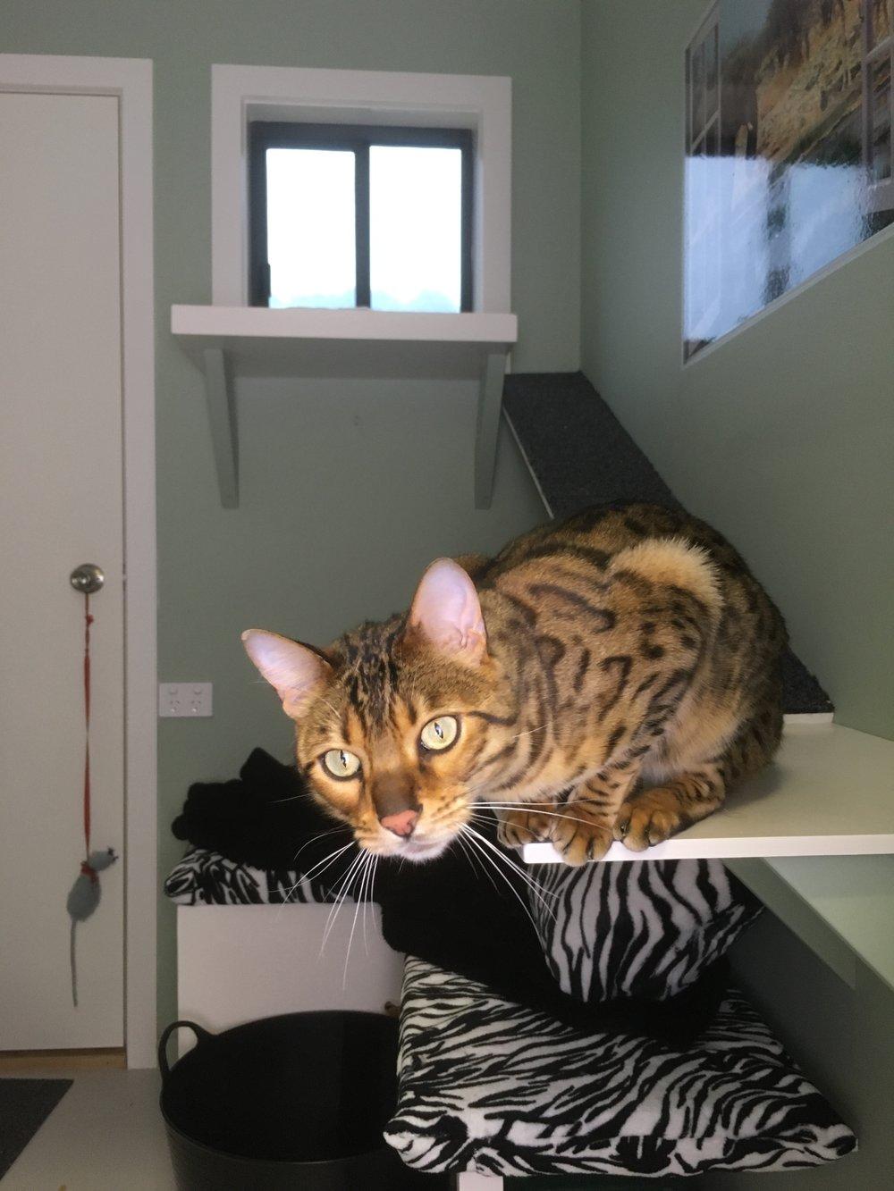 Savannah Cattery Suite