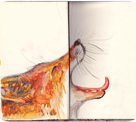 A yawning fox doodle