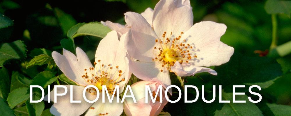 diploma modules.jpg