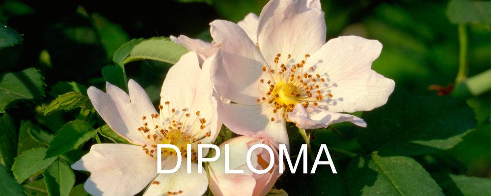 diploma new.jpg