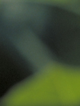 Bild-X —.png