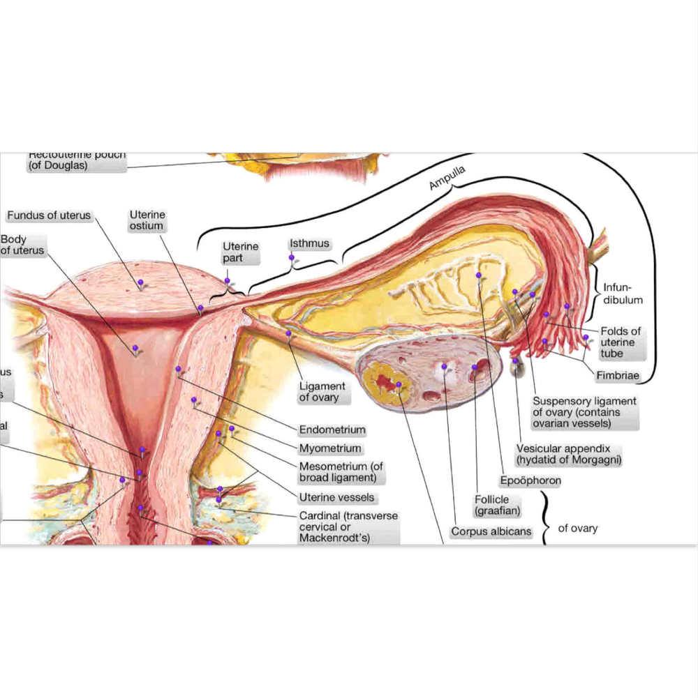 2 Detail Diagram.jpg