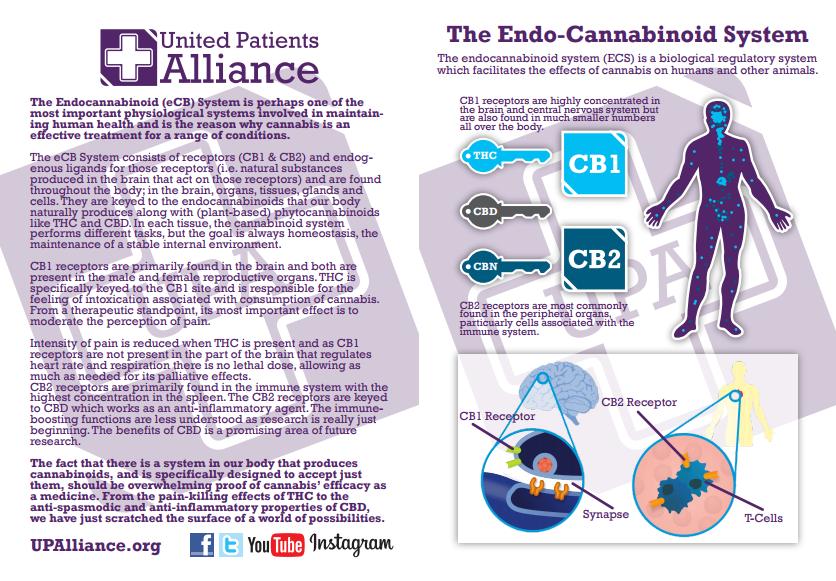 UPA-endocannabinoid-leaflet.png