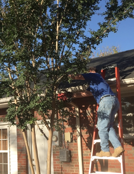 Volunteer using a chainsaw to free power lines up from a tree.