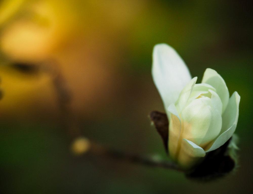 Blossom Reprint.png