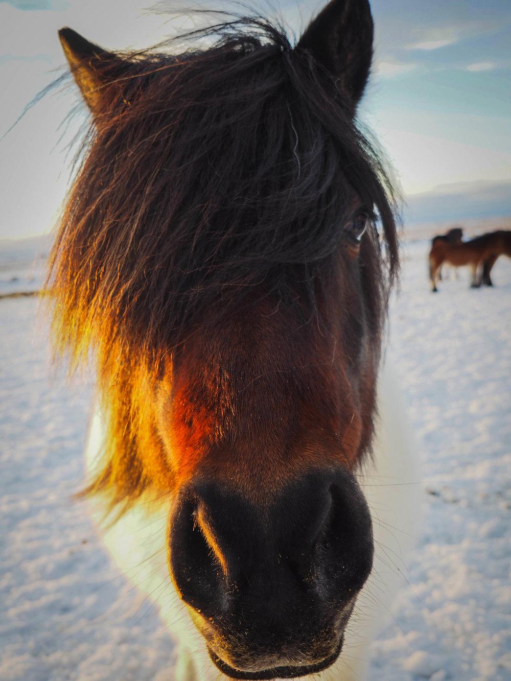 Horse Reprint.png