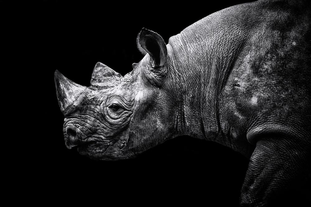 Rhino 2 Flickr.jpg