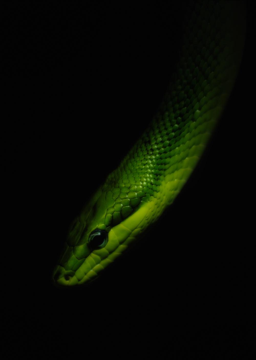 Green snake midnight.jpg