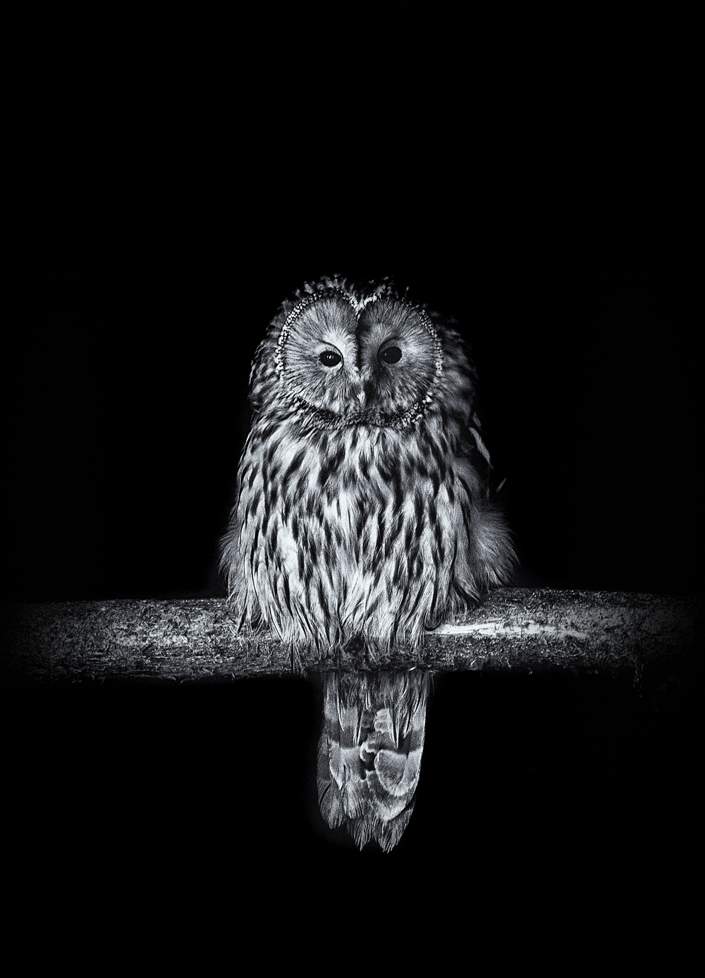 Owl 2 final.jpg