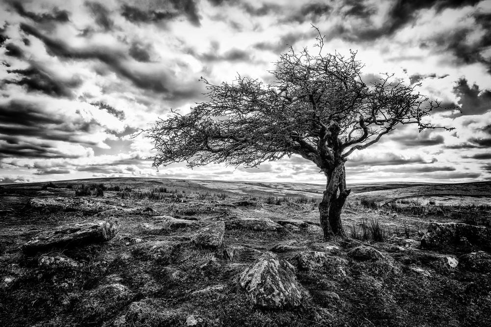Dartmoor final edits 47 flickr.jpg