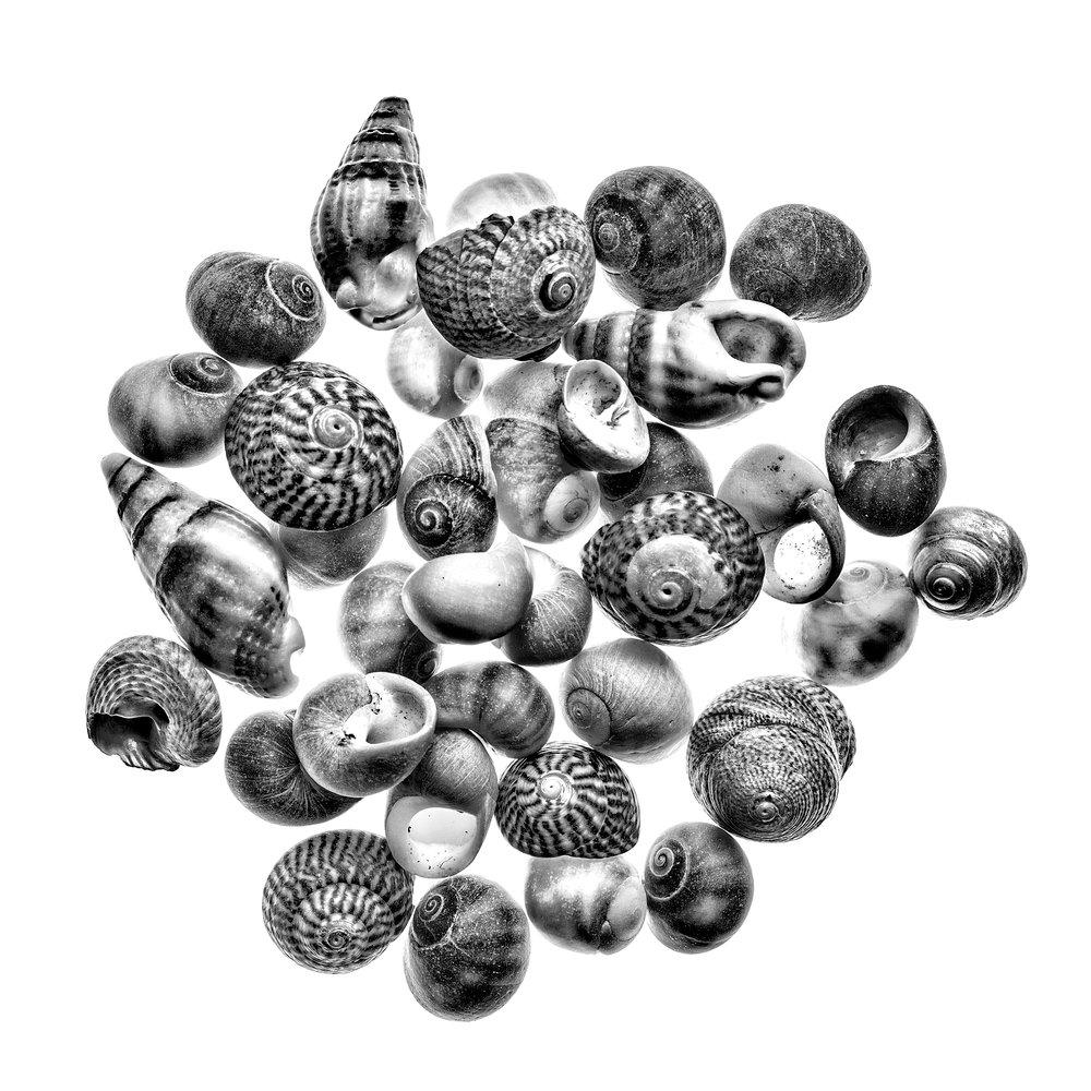 shells bw flickr.jpg