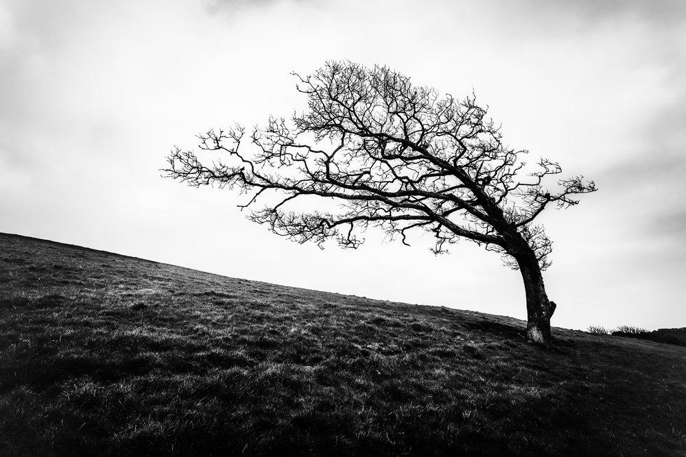 Mawnan smith 10 tree BW flickr.jpg