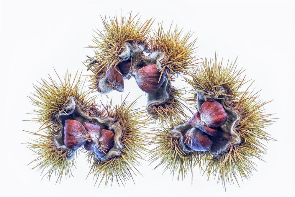 Chestnuts 2 Final_.jpg