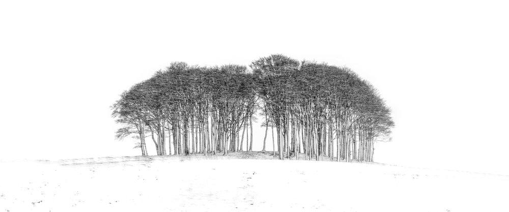 Trees snow 3 blizzard final for Website.jpg