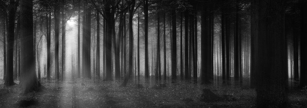 pano fog sunlight_.jpg