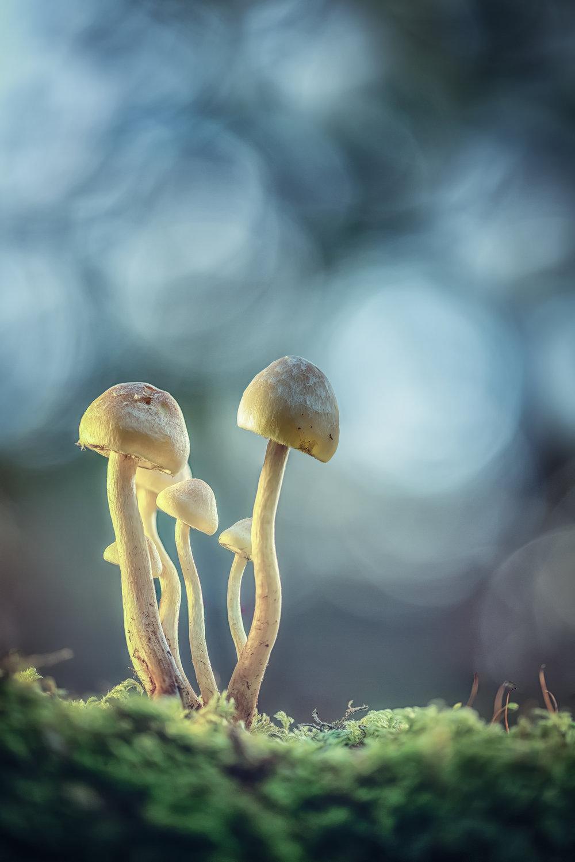 mushrooms new 5 final.jpg