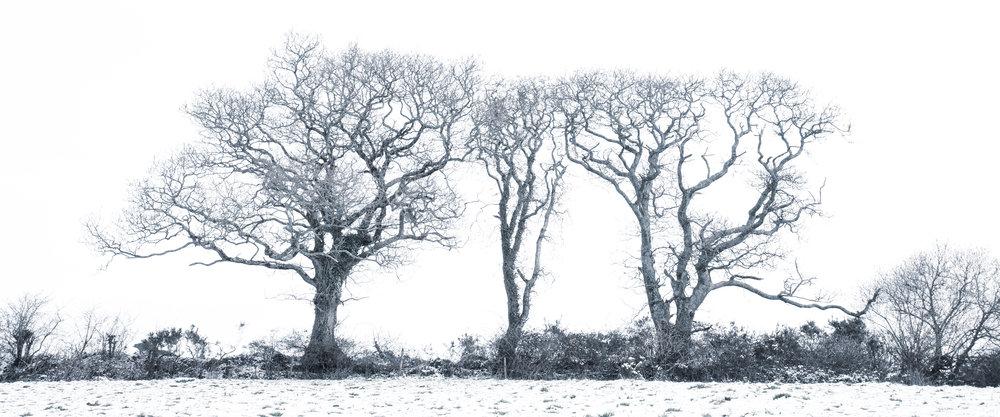 shutterstock snow trees pano 10 flickr.jpg