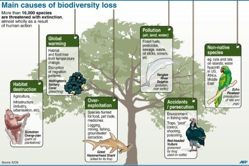 Image:  IUCN.org  Source of international information on biodiversity