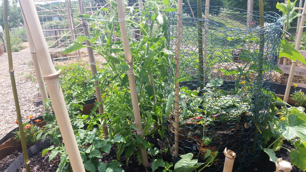 "African keyhole garden made of compost bins linked by zip ties with a central area for composting to ""feed"" the garden."