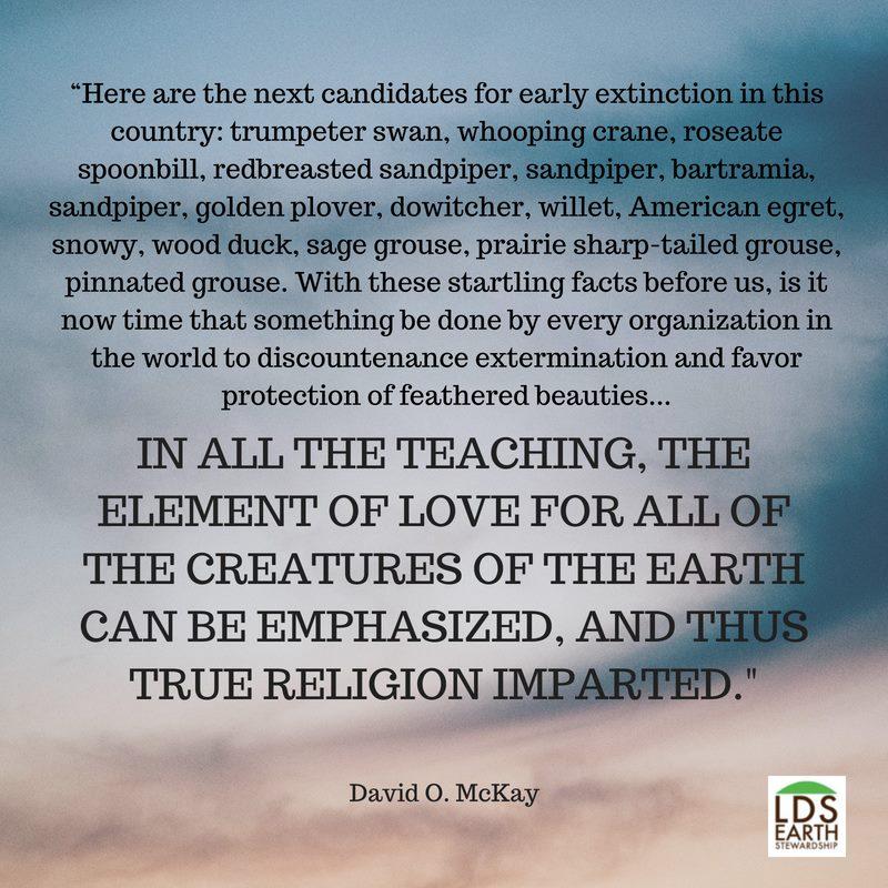 McKay quote.jpg