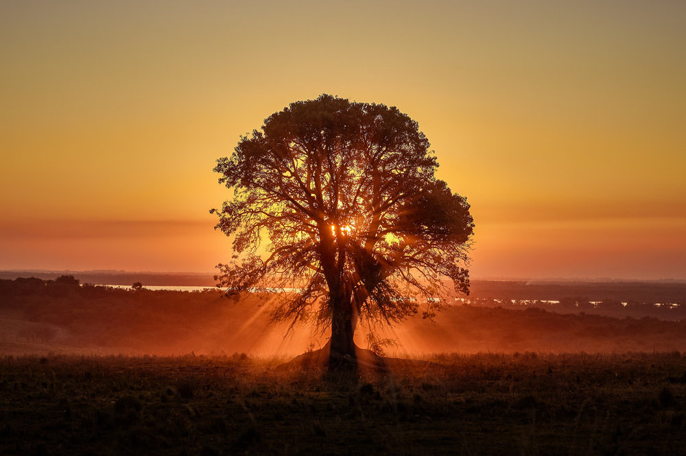 Tree of Life image by Emilio Kuffer