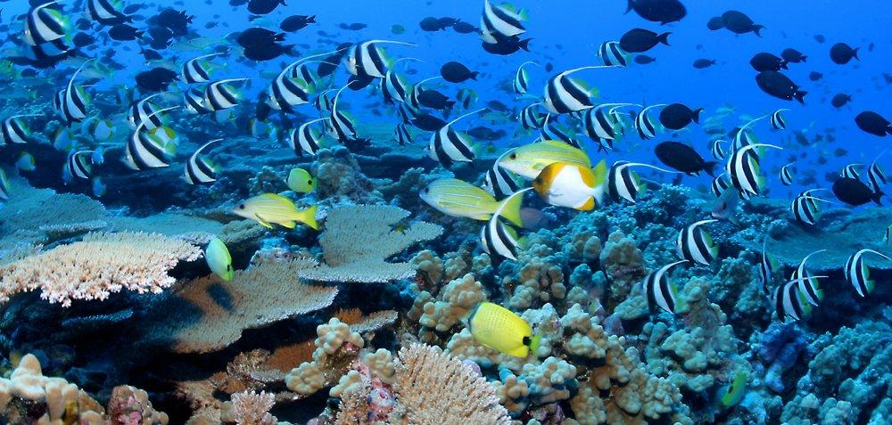 coral ecosystems reeffish, noaa.jpg