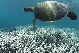 sea turtle, noaa.jpg