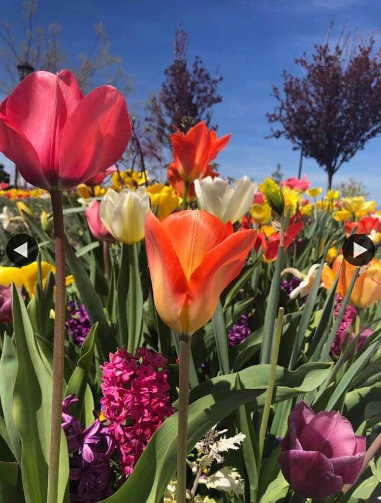 Happy Spring! - Photo taken by a friend of Teresa Mohr and shared with her permission.Here's hoping you're having a wonderful spring and are reminded with spring's renewal of life, of the gift of our Savior's love commemorated at this Easter season.