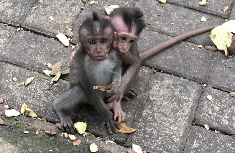 Baby monkeys in Ubud, Bali.