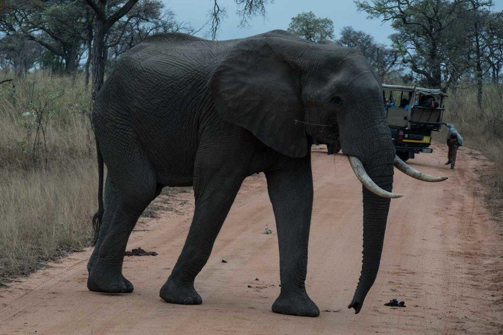 2016-10-02 Kruger So. Afeica-193.jpg