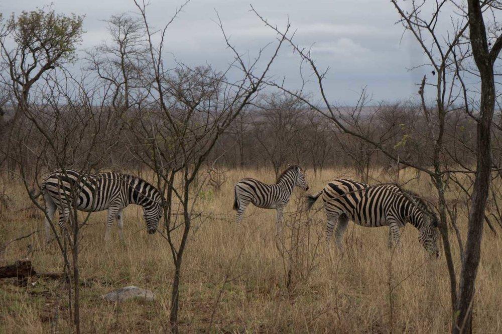 2016-10-02 Kruger So. Afeica-239.jpg