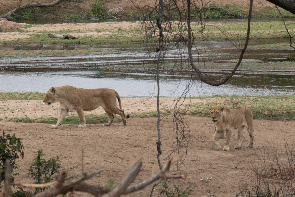 2016-10-02 Kruger So. Afeica-233-2.jpg